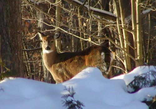 Taken out the back window on Jan. 11, 2009
