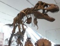 Click here to register for Rhymes at the ROM